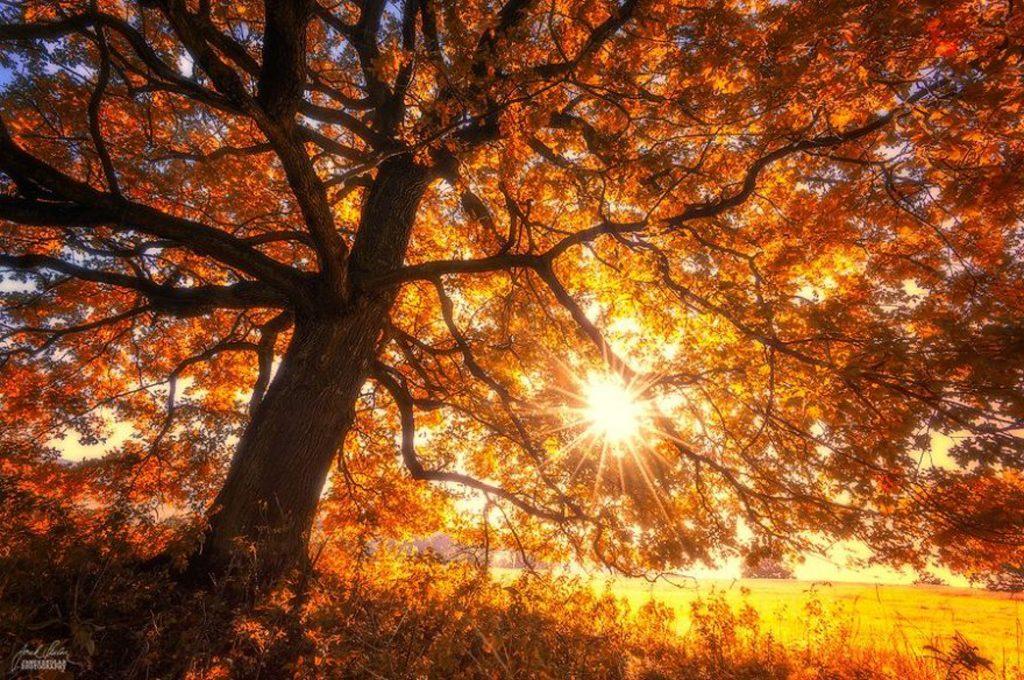 Ну вот и снова золотая осень