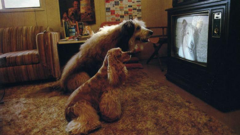 """""""Феномен старой собаки и телевизора"""" или как мы на инстинктах воспринимаем все Сверхъестественное"""