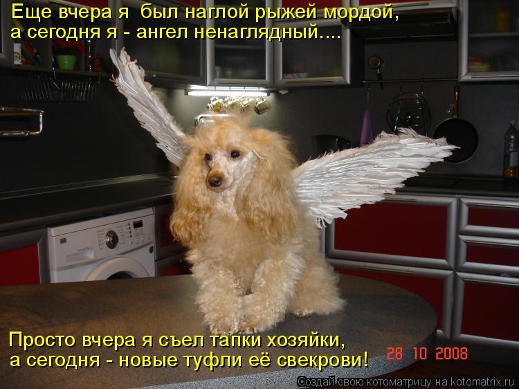 Котоматрица - Еще вчера я  был наглой рыжей мордой, а сегодня я - ангел ненаглядный.