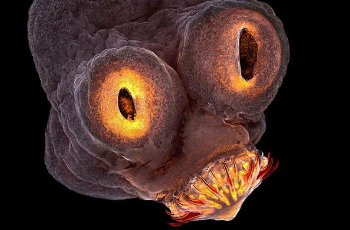 В конкурсе научной фотографии победили цепень и детектор темной материи