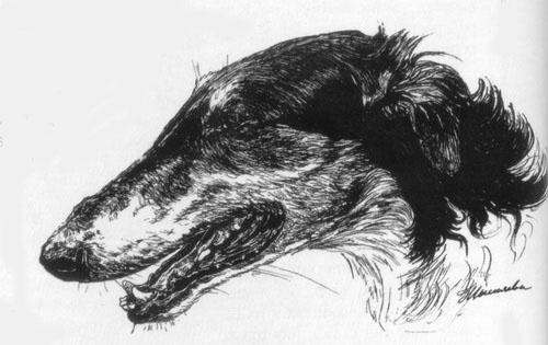Приметы, поговорки и суеверия псовых охотников