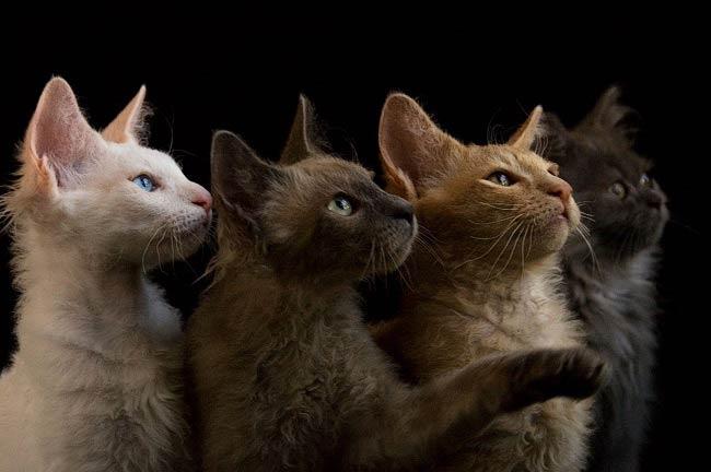 Кошка, просто кошка.