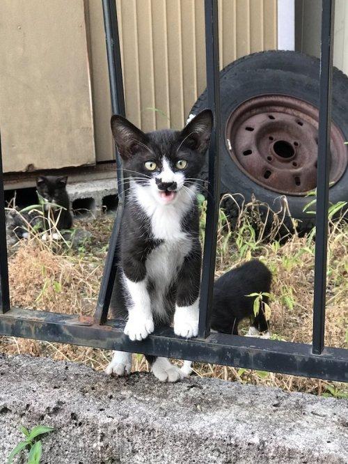 Очаровательная кошка с необычным окрасом на мордочке в виде кошки