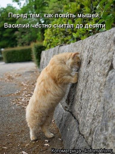 Новая котоматрица подарит позитив (34 фото)