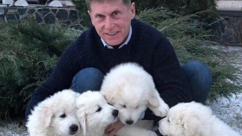 Критика Олега Кожемяко оказалась китайским ширпортребом