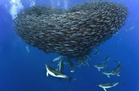 Атлантический океан интересные факты