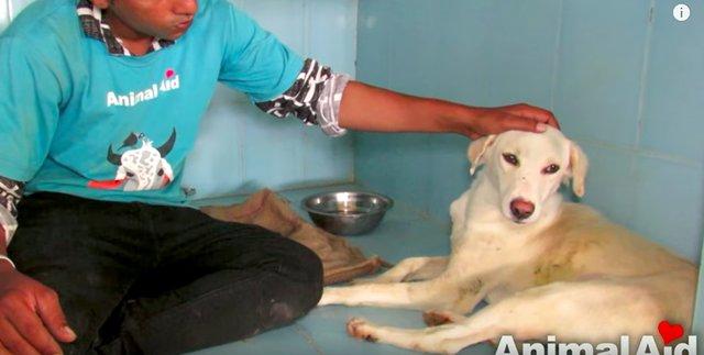 Собака тонула, но продолжала надеяться... Посмотрите на ее реакцию, когда появились люди