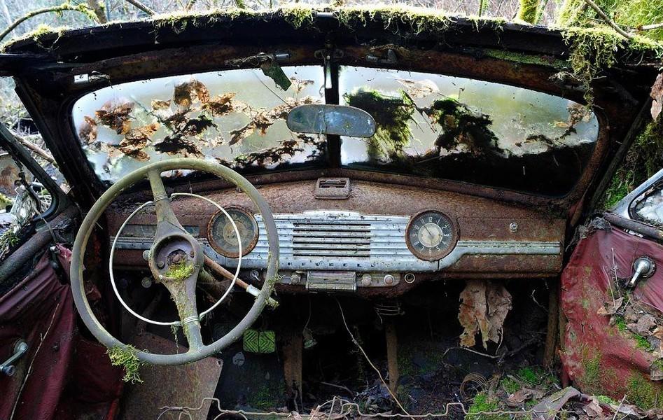 Кладбище автомобилей заброшенное, красиво, мир без людей, природа берет свое, фото, цивилизация