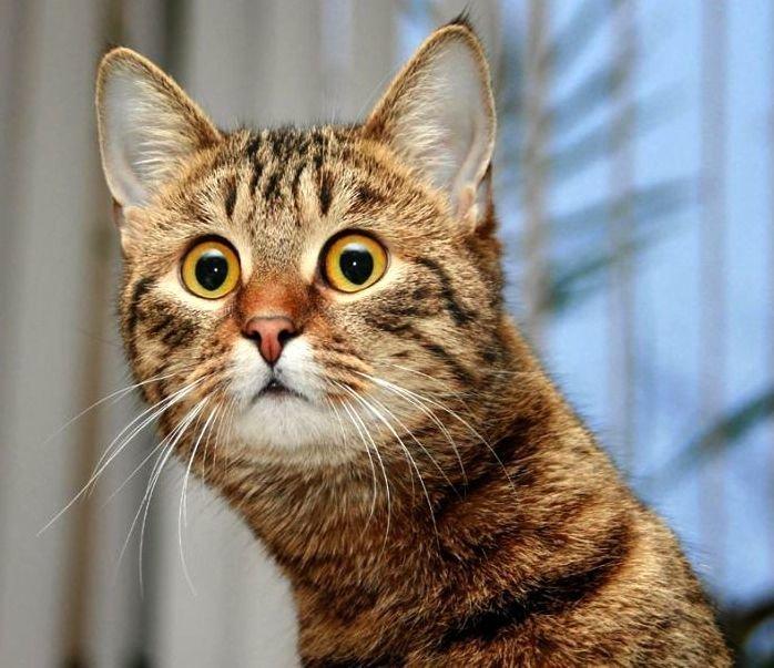 6 кошачьих привычек, которым…