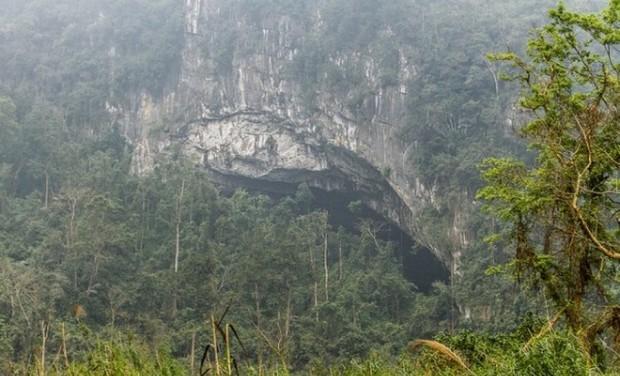 Фермер случайно нашел пещеру. То, что оказалось внутри, поразило весь мир!