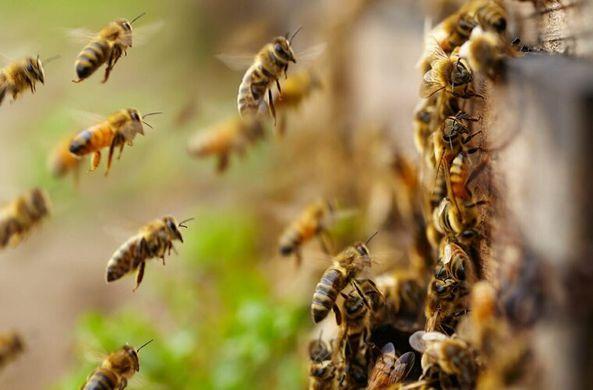 Супруги из Испании два года делили свой дом с пчелами