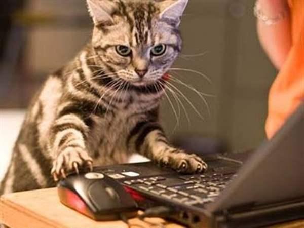 Кошка заходит в кафе, заказывает кофе и пирожное. Официант стоит с открытым ртом. Кошка: ..