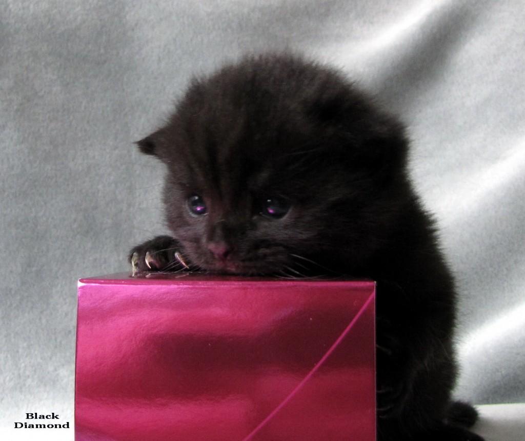 Фото черных кисок 3 фотография