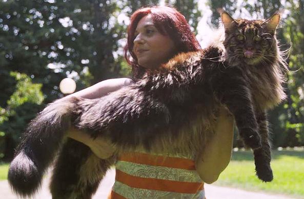 Самый длинный кот в мире зафиксирован Книгой рекордов Гиннеса