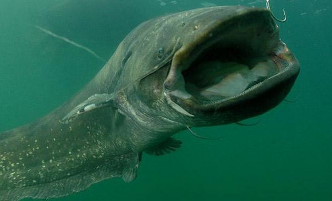 Рыбы из чернобыльского пруда