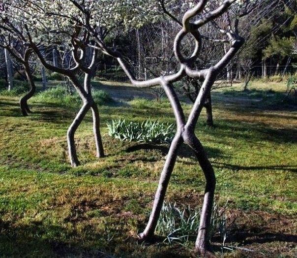 Аксель Эрландсон (Axel Erlandson) (1884 – 1964) был необычным фермером, который заставлял расти деревья по его собственному дизайну.
