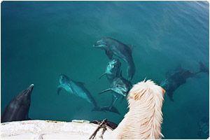 Про собаку-дельфиняку))))) Original
