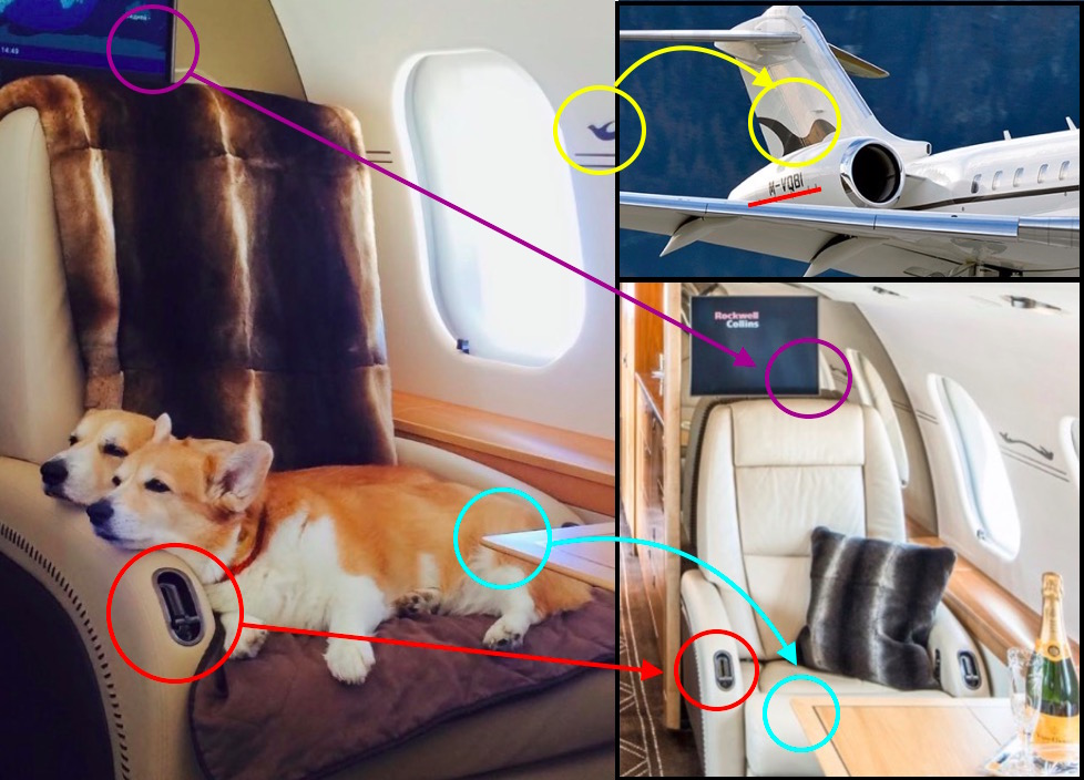 Круто. На самолетах ВЭБа будут возить собак