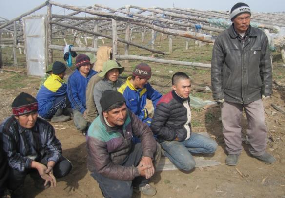 Нелегалы из Китая выращивают помидоры за неделю