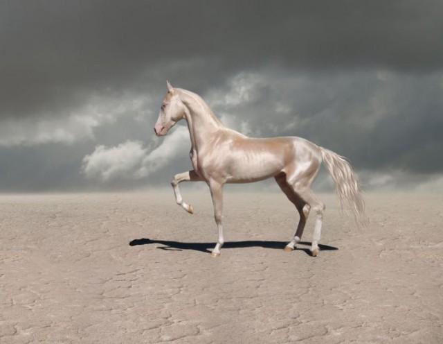 Супермодель в мире лошадей: …