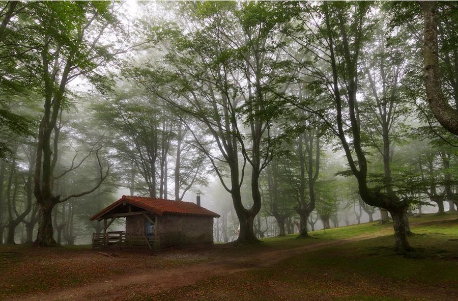 houseinwood16 Самые красивые дома в лесу