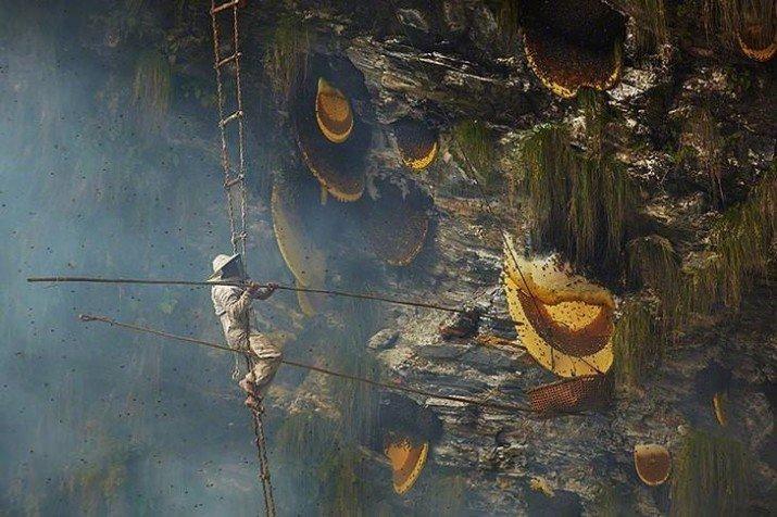Большие желтые штуки — соты диких пчел в Непале в мире, вещи, размер, удивительно, фото