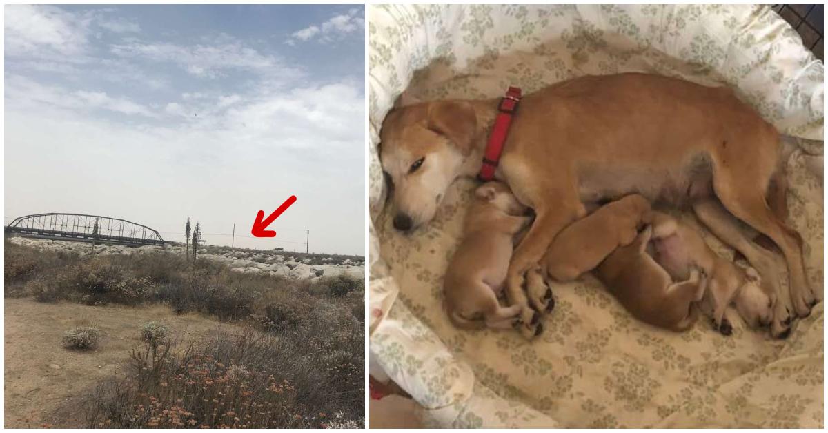 «Она показала мне свой самый большой секрет!» 6-месячная собака выжила под мостом и сберегла щенков)