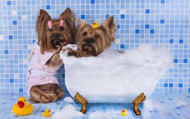 Банный день: как сделать купание собачки менее стрессовым?