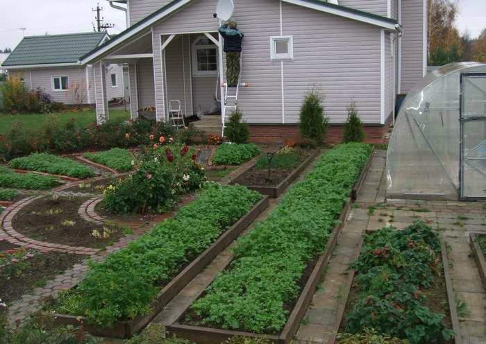 Вот это огород!!