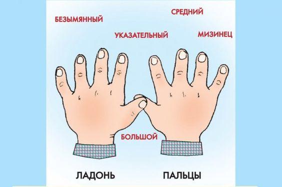 КАК ЗОВУТ ВАС, ПАЛЬЧИКИ?)