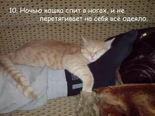 Почему кошка лучше, чем женщина