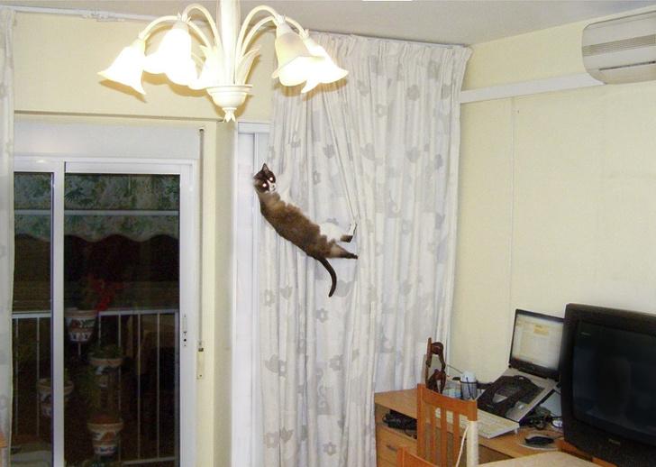 18 котов-преступников, котор…