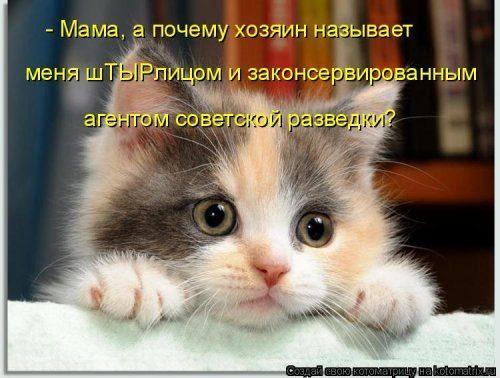 Свежая порция забавных котоматриц)