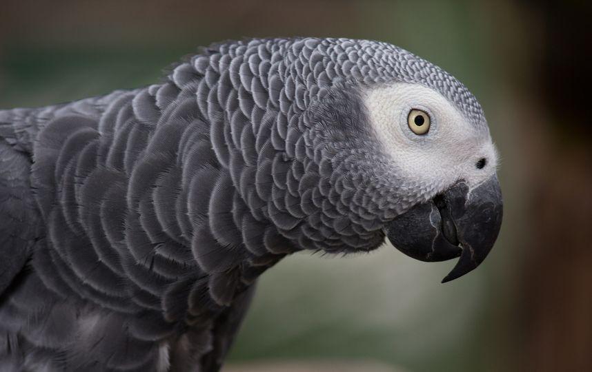 В США попугай делает заказы на Amazon, пока хозяйки нет дома