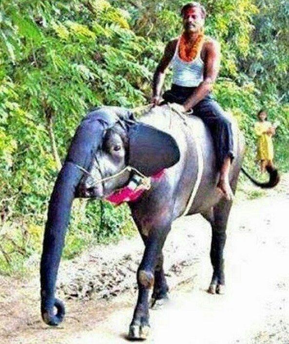 Если нет слона funny foto, индия, интересно, смешно, юмор
