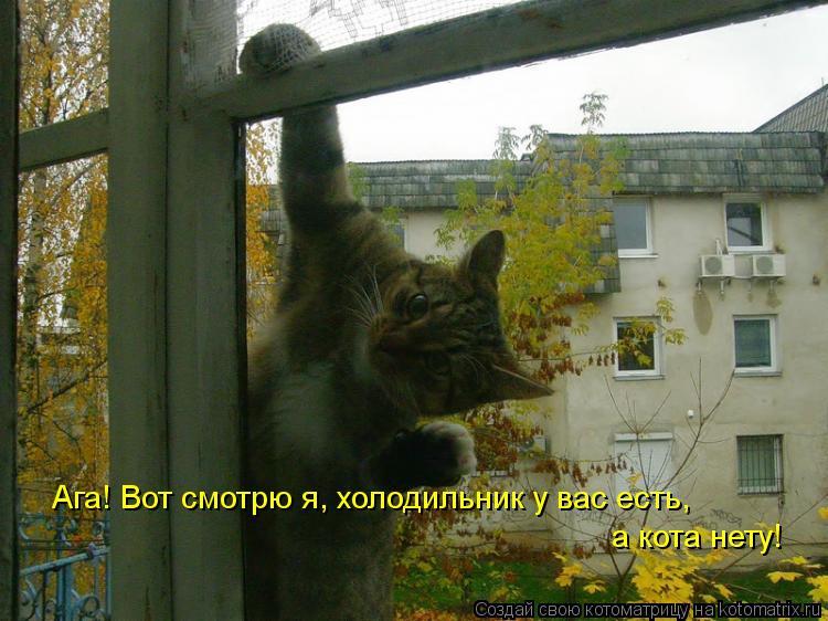 Ура!! Пятница - котоматрица!!!