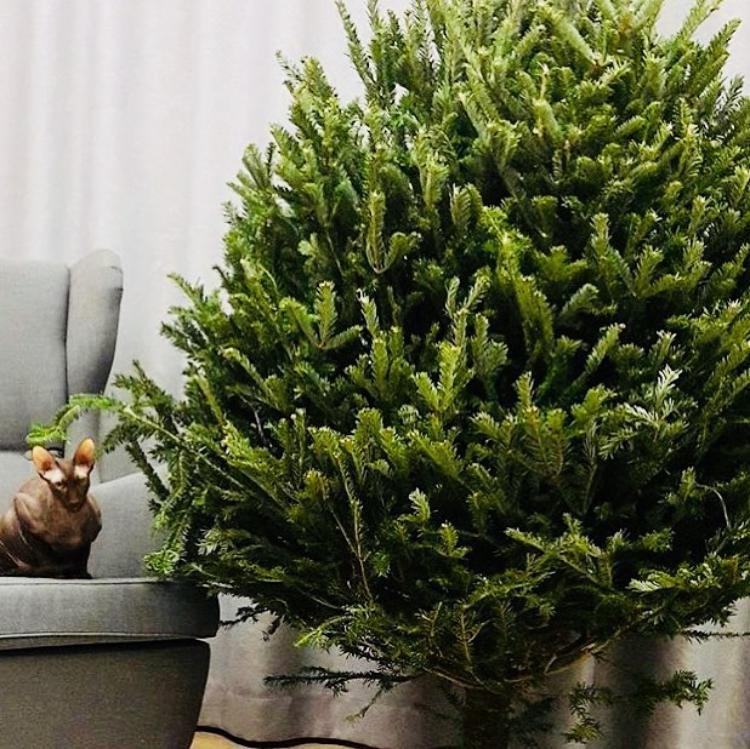 Новогодние елки и другие рас…