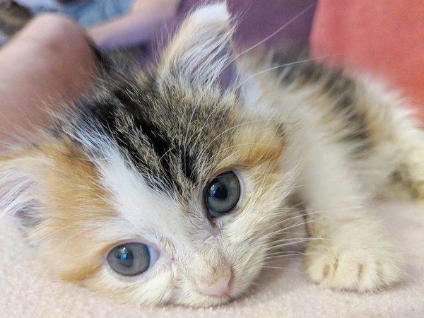 Миленький котёнок-злюка