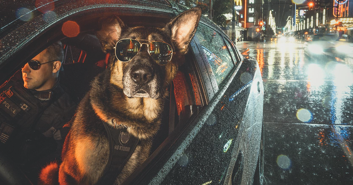 Badass Police Dogs Pose For 2019 Charity Calendar