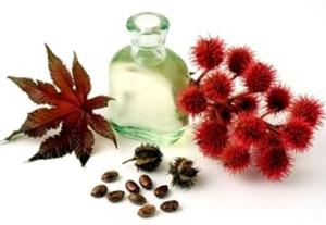 Касторовое масло (касторка) в косметологии, касторка для волос, ресниц и бровей
