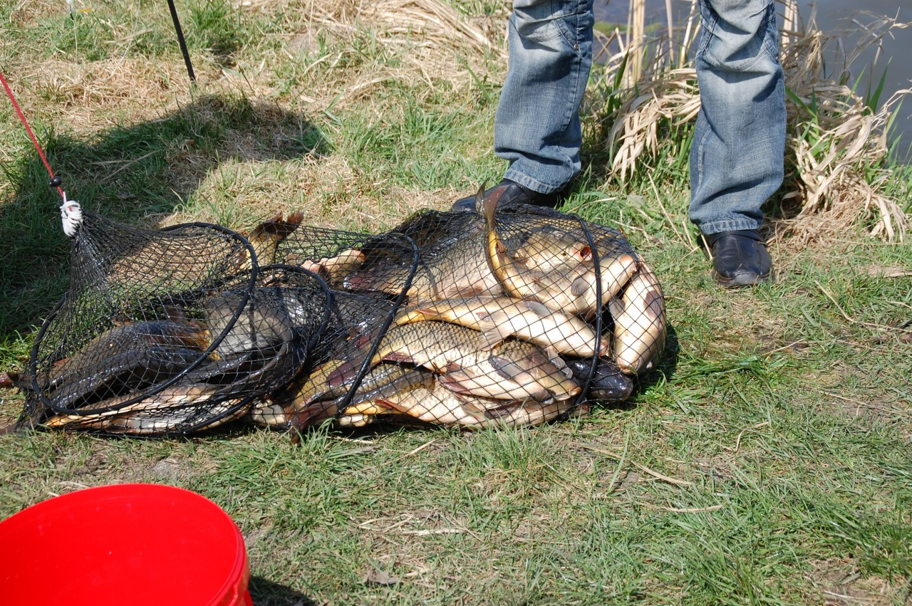 на каком ветре лучше не ловить рыбу