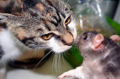 КОШКИН ДОМ. Кошка и другие домашние животные