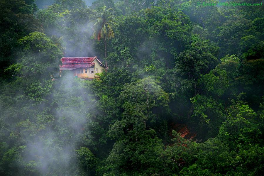 houseinwood19 Самые красивые дома в лесу