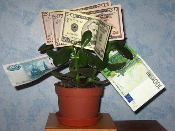 Заговоры на денежное дерево