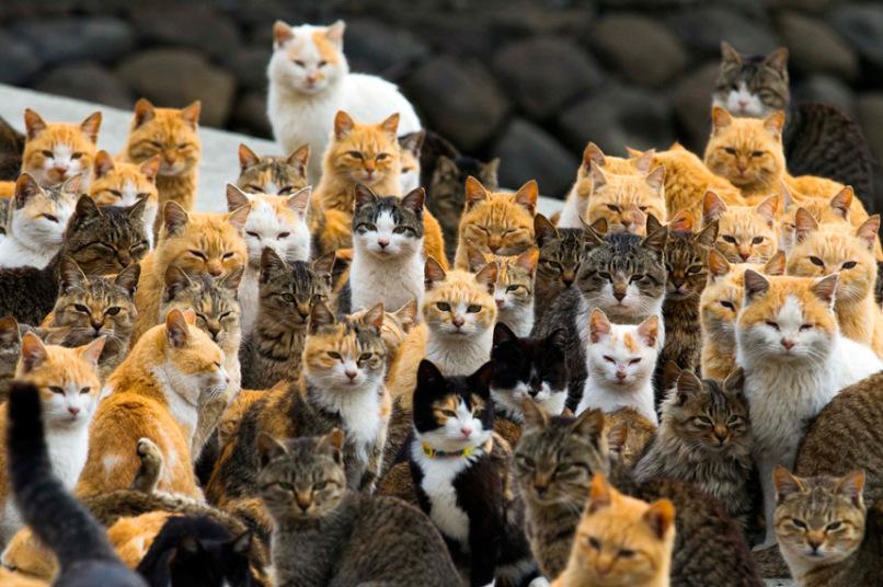 «Царство кошек»: фото с острова, где кошек больше, чем людей