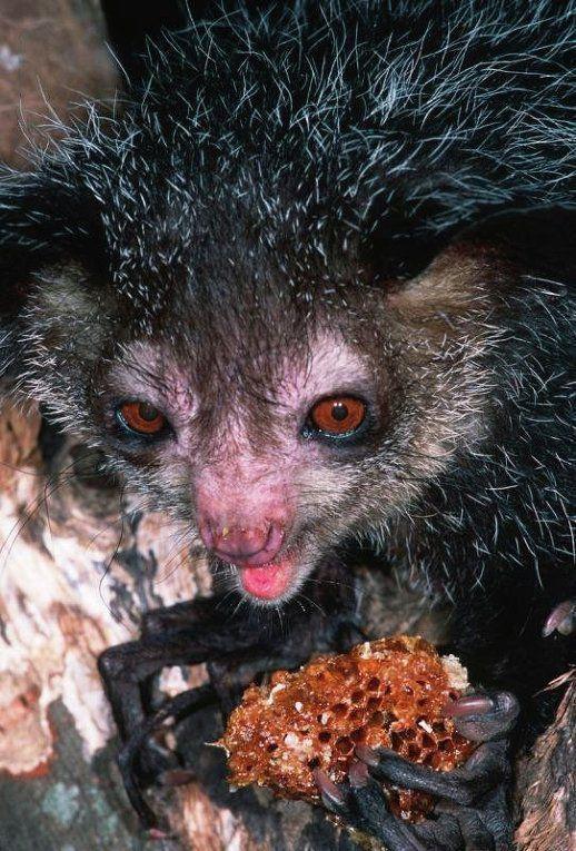 Самые страшные животные по версии WWF wwf, животные