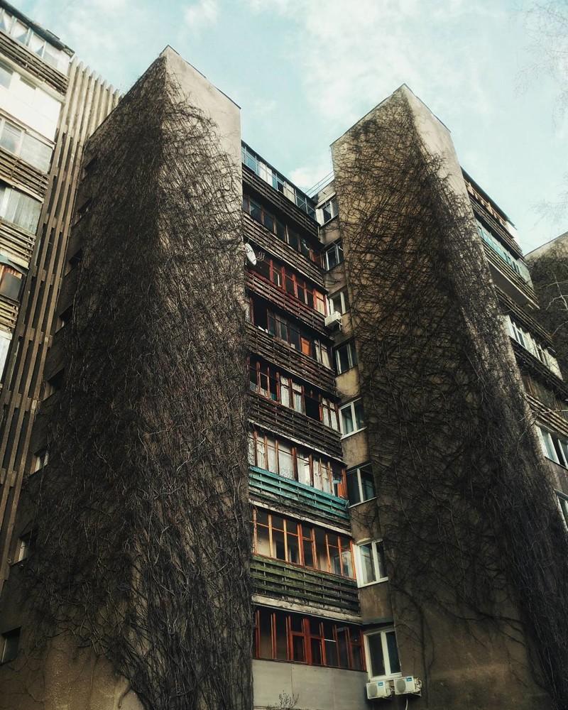 Плющ на доме, Харьков заброшенное, красиво, мир без людей, природа берет свое, фото, цивилизация