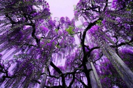 Парк цветов Асикага..