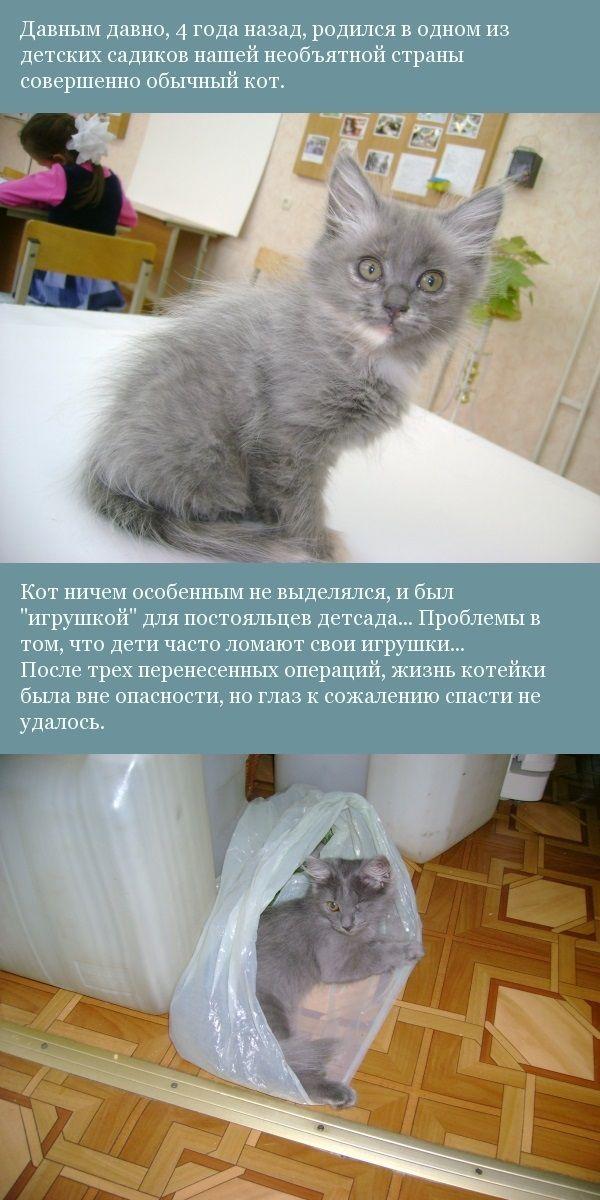 Жил-был кот... кот, жизнь, семья