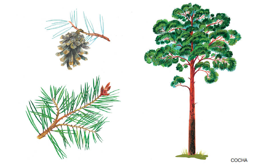 Книга рисунок для детей 3